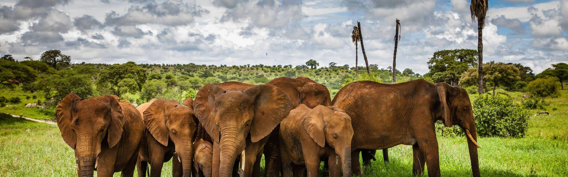Singlereis Zanzibar & safari Tanzania